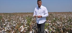Beyaz altında buruk hasat Ceyhan Ziraat Odası Meclis Başkanı Yavuz Tezcan, pamuk fiyatlarının geçen yıla göre yüzde 30 düşük seyrettiğine dikkat çekerek çiftçiye ürettiği kadar ürün teşviki verilmesi gerektiğine dikkat çekti