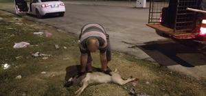 Aracın çarptığı köpeğe belediye ekipleri müdahale etti