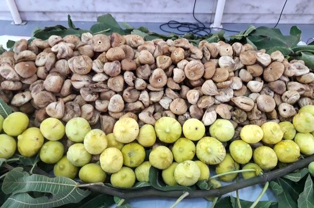 Çin'e 3,7 milyon dolar kuru incir ihracatı yapıldı Çin'e kuru meyve ihracatında yüzde 183'lük rekor artış yaşandı