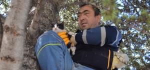 Ağaçta mahsur kalan yavru kedi itfaiye ekiplerince kurtarıldı