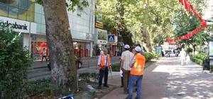 Anıt ağaçlara tedavi için rapor hazırlanıyor