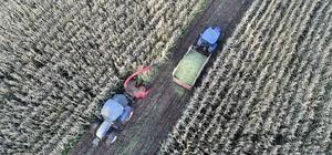 Silajlık mısırı soğuk hava vurdu Sivas'ta geçtiğimiz günlerde yaşanan soğuk hava silajlık mısır üretimi yapan çiftçinin ürün kaybına neden oldu