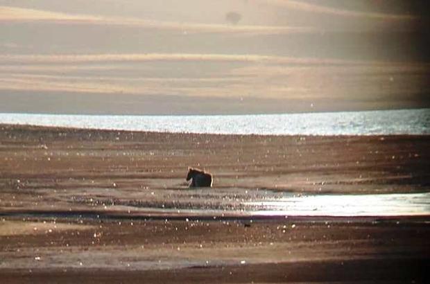 Doğa Koruma ekipleri bölgede ilk kez görülen yavru ayıyı yaşam alanına götürdü