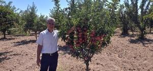 Tatvan'daki meyve bahçeleri kontrol edildi