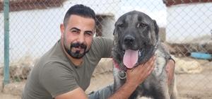 Lüks bir otomobil fiyatında, değeri dudak uçuklatıyor Sivas'ın Altınyayla ilçesinde ilçesin de bulunan köpek çiftliğindeki 'Mega' adındaki kangal köpeğinin fiyatı dudak uçuklatıyor 10 aylık Mega'ya 250-300 bin lira değer biçiliyor