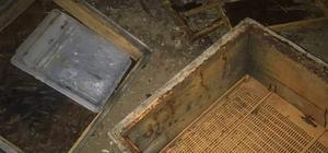 Kastamonu'da ilçeye kadar inen ayı, 10 arı kovanını parçaladı
