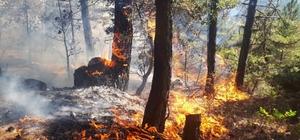 Bilecik'teki orman yangınında 6 hektar alan kül oldu