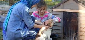 """(Özel) Küçük yaşta eğitim, hayvan sevgisini gelecek nesillere aşılıyor Dünya Hayvanları Koruma Günü'nde çocuk eğitimcilerinden dikkat çeken öneri Özel Eğitim Alanı Uzmanı Özge Semerci: """"Merhamet duygusunu çocuklarımıza aşıladığımızda büyüdüklerinde hayvanlara zarar vermeyeceklerdir"""""""