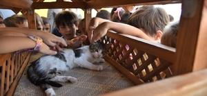 Karesi'de hayvan sevgisi büyüyor Karesi'deki okullar sokak hayvanlarını sahipleniyor