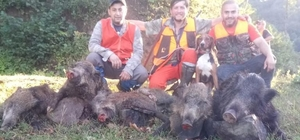 Mahalleyi canından bezdiren domuzları avladılar