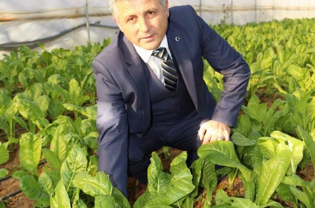 """16 Ekim Dünya Gıda Günü Trabzon Ziraat Mühendisleri Odası Başkanı Cemil Pehlevan: """"BM'nin raporuna göre 821,6 milyon insan yani dünya nüfusunun yüzde 11 açlık çekmektedir"""""""