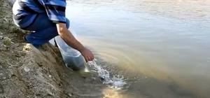 Demirköprü Barajı'na yayın balığı takviyesi Demirköprü Baraj Gölü'ne 2 bin yayın balığı yavrusu bırakıldı