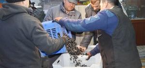 Erdek'te zeytin alımları başlıyor