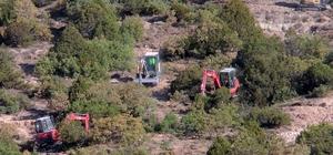 Yunus Emre ağaçlandırma sahasına 228 bin fidan dikilecek