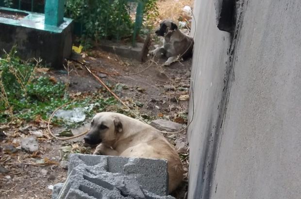 Silvan'da başı boş gezen köpekler vatandaşları korkutuyor