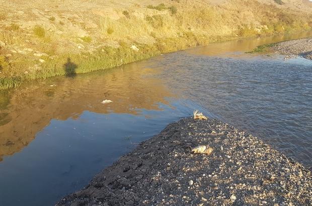 Dicle Nehri'ne hayvan pisliği atan şahıslar hakkında yasal işlem başlatıldı