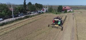 Çeltikte dane kaybı düştü, 2,8 milyon TL kazanç sağlandı 2019 yılı çeltik hasadı sonu değerlendirmesi