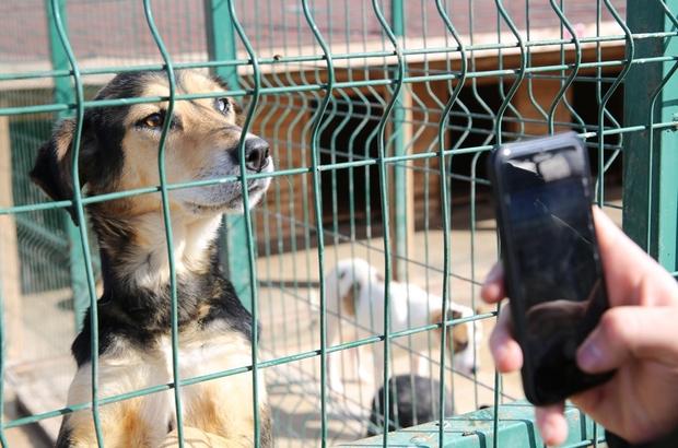 Sokak hayvanlarına 5 yıldızlı konfor Sivas'ta Hayvan otelinde sokak hayvanlarına konforlu sıcak bir yuva imkanı sağlanıyor