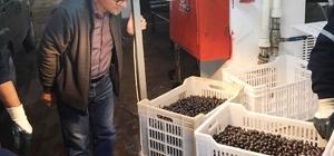 Erdek'te zeytin alımları sürüyor Üreticilerin zeytin paraları bankaya yattı