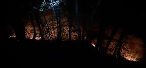 Ordu'da orman yangınları kontrol altında