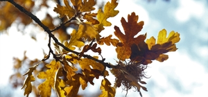 Hekimdağ sonbahar renklerine büründü Hekimdağ'da renk cümbüşü