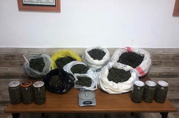 Fındıklık bahçesinde kavanoz ve bidonlara saklanmış 9 kilo esrar ele geçirildi Sakarya'da ki uyuşturucu operasyonunda 2 kardeş tutuklandı