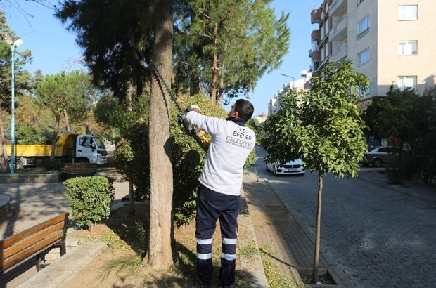 Efeler Belediyesi yeşil alanlarda bakım çalışmalarına devam ediyor