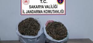 Sakarya'da esrar operasyonu: 1 tutuklama