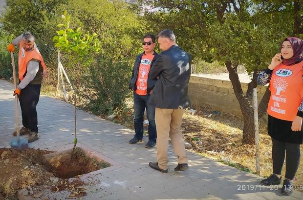 Kozan'ın simgesi turunç ağaçlarına bakım