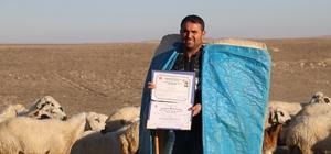 İki yabancı dil bilen aday öğretmen çobanlık yapıyor