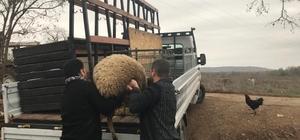 JASAT'tan koyun hırsızlarına operasyon Koyun hırsızları, çaldıkları koyunları oto yıkamacıda kestiler