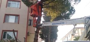 Erenler'de ağaç budama çalışmaları devam ediyor