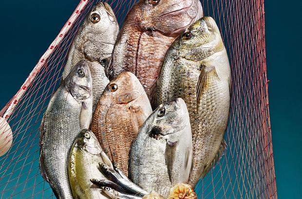 Balıklar bu yarışma ile meşhur olacak Balıkları oltalar değil objektifler yakalayacak