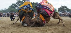Burhaniye'de güreş tutkunu amatör fotoğrafçı ilgi odağı oldu