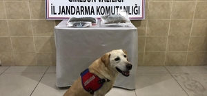 """Giresun'da uyuşturucu operasyonu: 2 gözaltı Narkotik köpek """"Haklı"""" ile yapılan arama 214 gram kubar esrar ile 14 kök kenevir ele geçirildi"""
