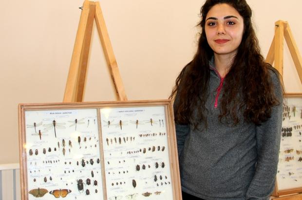 Yüzlerce türden 2 bin 500 adet böcek Erzurum'da sergileniyor ile ilgili görsel sonucu