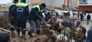 Çifteler'de 20 bin ceviz fidanı dağıtıldı