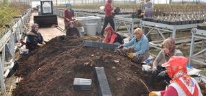 Sandıklı'da jeotermal serada yılda 3 milyon meyve fidanı üretiyor Azerbaycan, Kırgızistan, Rusya ve Suriye'ye meyve fidanı ihraç ediliyor
