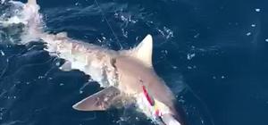 Adana'da amatör balıkçıların oltasına köpek balıkları takıldı Amatör balıkçılar bota aldıkları balıkları inceledikten sonra tekrar denize bıraktı