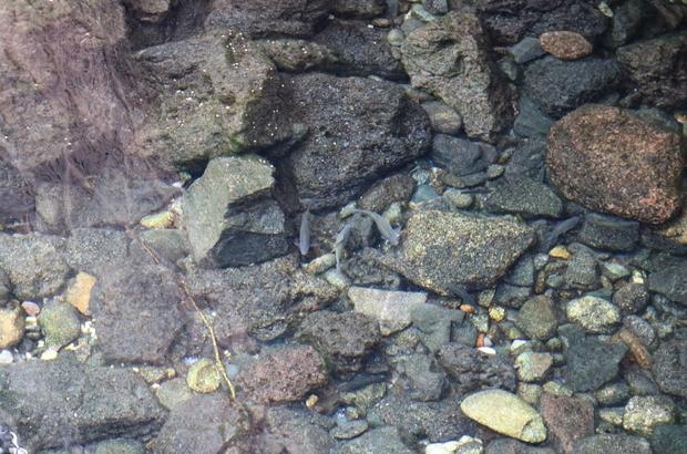 Diyarbakır'ın tarihi Anzele suyu 'Balıklıgöl'e döndü Yaz aylarının kavurucu sıcağında özellikle çocukların serinlemek için girdiği Anzele'de, çeşitli balıklar ortaya çıktı Vatandaşlar, Şanlıurfa'da bulunan Balıklıgöl'ü andıran alanın koruma altına alınarak turizme kazandırılmasını istiyor