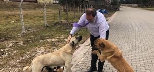 Spor İl Müdürü, sevgi gösteren sokak hayvanlarına duyarsız kalmadı Ordu Gençlik ve Spor İl Müdürü Mustafa Genç, kendisine sevgi gösteren sokak köpekleri ile oynadı, yiyecek alıp onları besledi