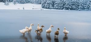 Akdağ beyaz gelinliği giydi Türkiye'nin eşsiz güzelliklerinden birisi olan Akdağ Tabiat Parkı büyüledi Yılkı atları, geyik, tilki, domuz, gibi yaban hayatının sürdüğü Akdağ Tabiat Parkı'nda bulunan gölet de havanın soğuması ile buz tuttu