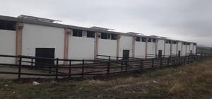 Diyarbakır'da ikinci Çiftlik Bank vakası 20 milyon lira ile sırra kadem bastılar