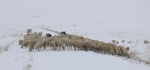Sivas'ta çobanların zorlu kış mesaisi