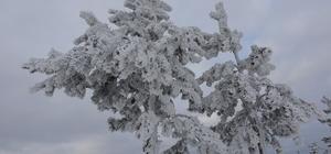Ardahan buz kesti, Göle ilçesi eksi 27 dereceyi gördü
