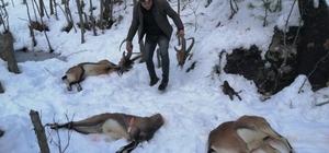 """Kaçak yaban keçisi avcılarına rekor ceza: 75 bin 835 TL Kardaki lastik izleri cansız keçi bedenlerine götürdü Doğa Koruma ve Milli Parklar Genel Müdürlüğü 6. Bölge Müdürü Rıza Kamil: """"Ben bu şahıslara avcı değil kaçakçı diyorum"""" """"Öldürülen yaban keçileri 2, 4 ve 6 yaşında. Avcılar yemin etmiş insanlardır. Yemin etmiş bir insan böyle bir iş yapmaz"""" """"2019 yılında kaçak avcılara 881 bin TL cezai işlem yapıldı"""""""