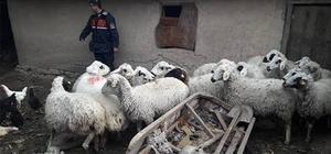 Çaldıkları hayvanları uyuşturucu madde karşılığında takas ettiler Ağıldan çaldıkları hayvanları kiraladıkları araçla Antalya'ya götürdüler, uyuşturucu karşılığında sattılar
