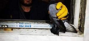 Havalandırma boşluğunda mahsur kalan güvercin itfaiye tarafından kurtarıldı