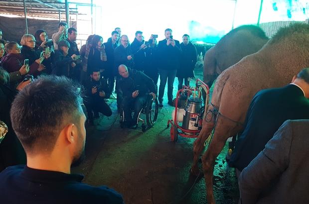 Uluslararası 'Deve Sütü' projesinin 2. toplantısı Aydın'da yapıldı