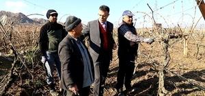 Başkan Öküzcüoğlu bağ budaması yapan çiftçileri yalnız bırakmadı